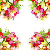 Colorful tulips border on white background — Stock Photo