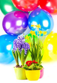Fresh spring flowers and colorful balloons — Foto Stock
