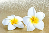 Frangipani spa flowers on golden background — Stock Photo