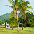 Stock Photo: Golf course. palms landscape