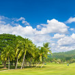 Stock Photo: Golf field with palm trees over blue cloudy sky