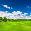 Green golf field with palms over cloudy sky background — Stock Photo