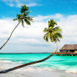 Palm beach. Tropical Island — Stock Photo
