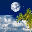 Stock Photo: Beautiful tropical night. palm trees over dark blue sky
