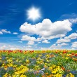 Flowerbed. colorful flowers over blue sky — Stock Photo