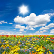 Flowerbed. colorful flowers over blue sky — Stock Photo #13766396