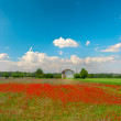 Poppies field and cloudy blue sky — Stock Photo