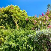 Nature background. lash tropical plants — Stock Photo