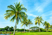 Golf Course, Lanscape with Palms — Stock Photo
