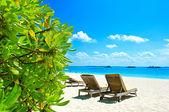 голубое небо и зеленые растения на тропическом пляже — Стоковое фото