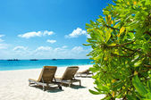 Blue sky and green plants on tropical beach — Stock Photo