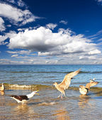 Sea gull on the sea, blue cloudy sky. typical scene on the Balti — Stock Photo