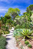 Beautiful tropical garden over blue sky — Stock Photo