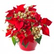 Christmas flower poinsettia with golden decoration — Stock Photo #13990603