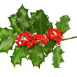 Christmas decoration holly with red berries — Stock Photo