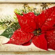 Foto Stock: Red poinsettia flower with christmas tree branch