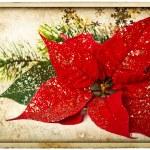 Roter Weihnachtsstern Blume mit Weihnachtsbaum Zweig — Stockfoto
