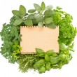 Open recipe book with collection of fresh herbs — Stock Photo