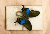 Beautiful butterfly and old post cards — Stock Photo