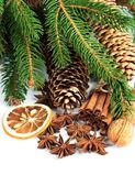 Pine brunch with cinnamon sticks — Stock Photo