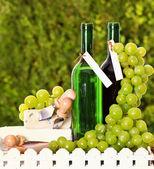 ワイン、チーズ、ブドウのボトル — ストック写真