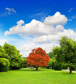 Beautiful park trees over dramatic blue sky — Stock Photo