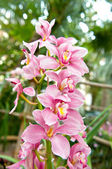 Pink orchid flower with tropical plants — Stock Photo