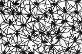 Inseto aranha preto no branco — Foto Stock