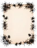 纸张背景与黑蜘蛛 — 图库照片