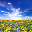 Flowerbed. colorful flowers over blue sky — Stock Photo #14182083