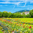 Stock Photo: Lanscape with colorful flowers and blue sky