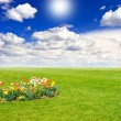 Green field with flowers and blue sky — Stock Photo