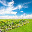 Flowerbed. colorful flowers over blue sky — Stock Photo #14185653