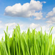 Fresh green grass against blue sky — Stock Photo