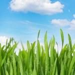 Fresh green grass against idyllic blue sky — Stock Photo