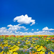 Flowerbed. colorful flowers over blue cloudy sky — Stock Photo