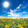 Flowerbed. colorful flowers over blue sky - Zdjęcie stockowe