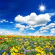 Tulips flower bed. colorful flowers over cloudy blue sky — Stock Photo