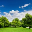 Beautiful park trees over blue sky. formal garden — Stock Photo