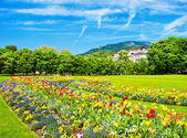 Lanscape with colorful flowers and blue sky — Stock Photo
