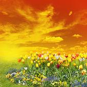 Tulip flowers at sunset — Stock Photo