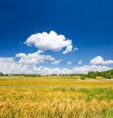 Countryside. landscape with wheat field and cloudy sky — Stock Photo