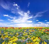 Kwietnik. kolorowe kwiaty nad niebieski niebo — Zdjęcie stockowe