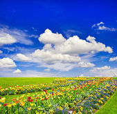 Landscape with colorful flowers and blue sky — Stock Photo