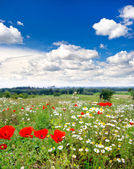 Countryside. beautiful meadow and cloudy blue — Stock Photo