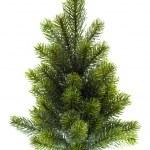 Evergreen christmas tree undecorated on white — Stock Photo