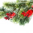 Stock Photo: Christmas tree branch with red berries