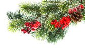 Christmas tree branch with red berries — Stock Photo