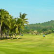 Golf course. palms landscape — Stock Photo