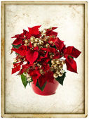 Christmas flower poinsettia. vintage card concept — Stockfoto